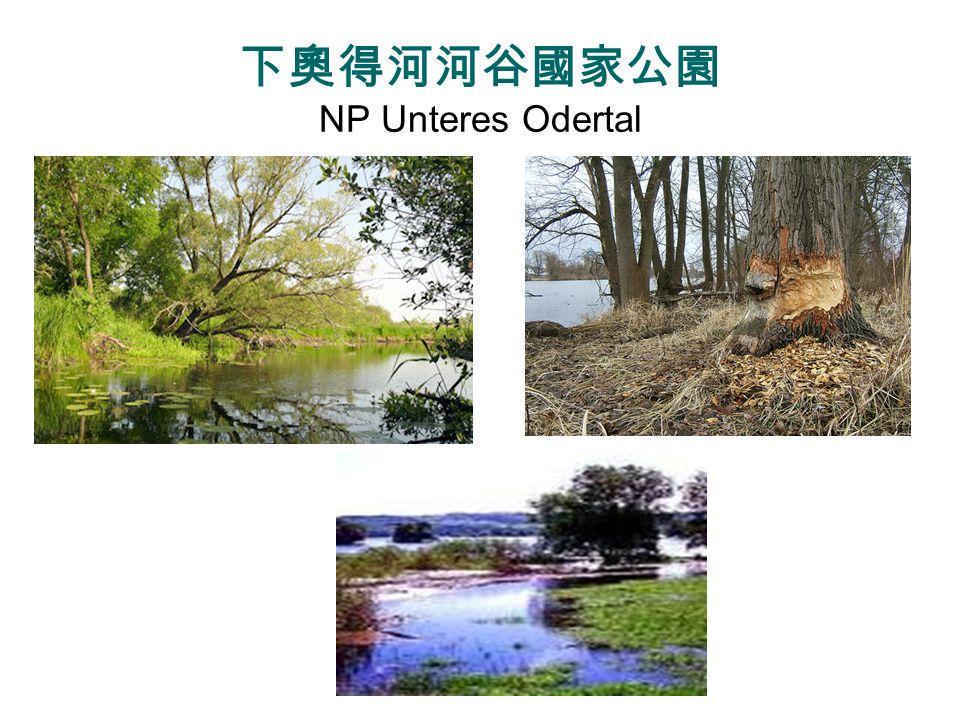 下奧得河河谷國家公園 NP Unteres Odertal
