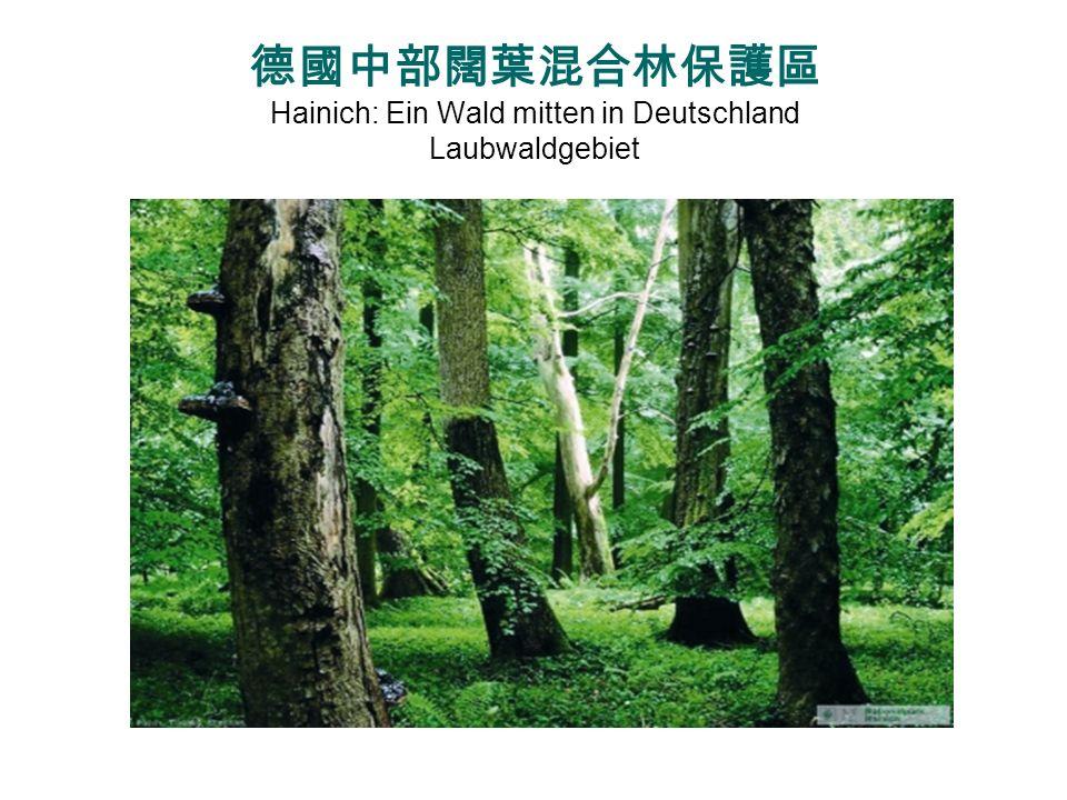 德國中部闊葉混合林保護區 Hainich: Ein Wald mitten in Deutschland Laubwaldgebiet