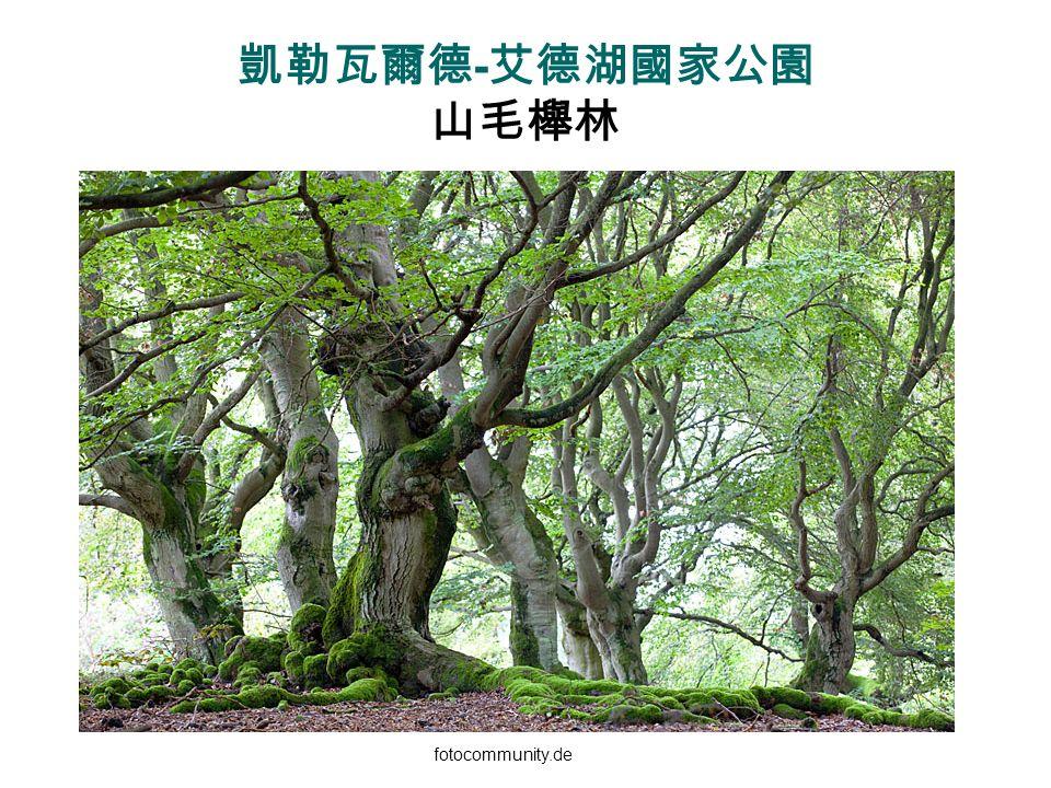 凱勒瓦爾德-艾德湖國家公園 山毛櫸林 fotocommunity.de