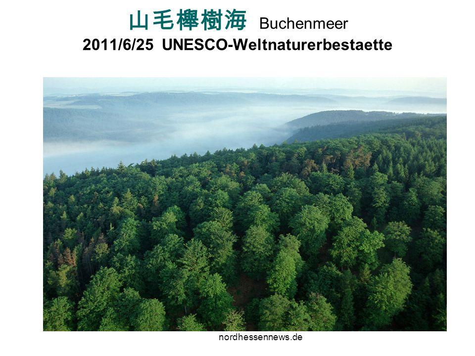 山毛櫸樹海 Buchenmeer 2011/6/25 UNESCO-Weltnaturerbestaette