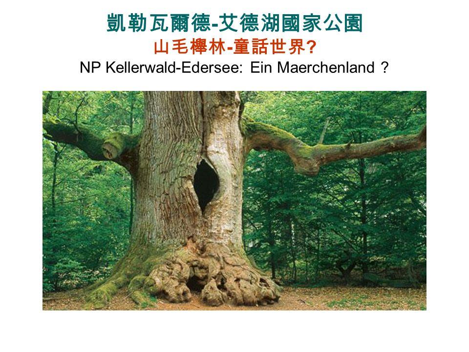 凱勒瓦爾德-艾德湖國家公園 山毛櫸林-童話世界 NP Kellerwald-Edersee: Ein Maerchenland