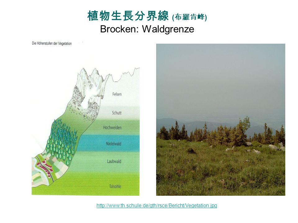 植物生長分界線 (布羅肯峰) Brocken: Waldgrenze