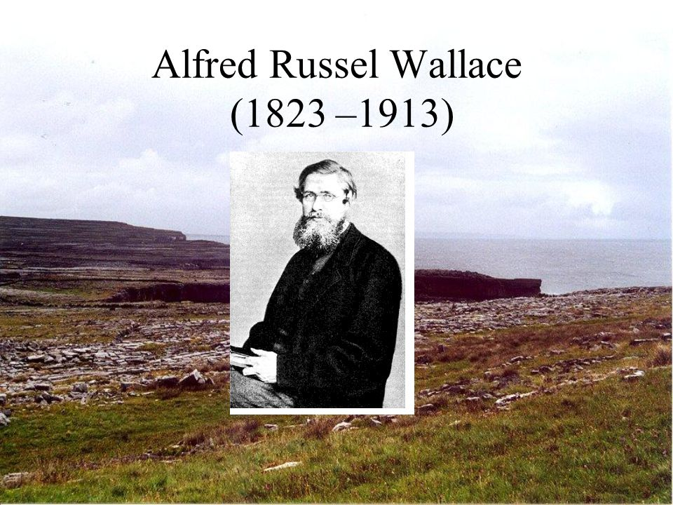 Alfred Russel Wallace (1823 –1913)