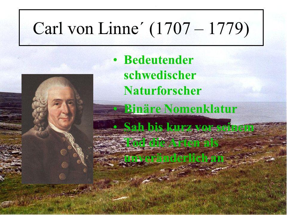 Carl von Linne´ (1707 – 1779) Bedeutender schwedischer Naturforscher
