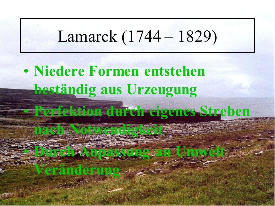 Lamarck (1744 – 1829) Niedere Formen entstehen beständig aus Urzeugung