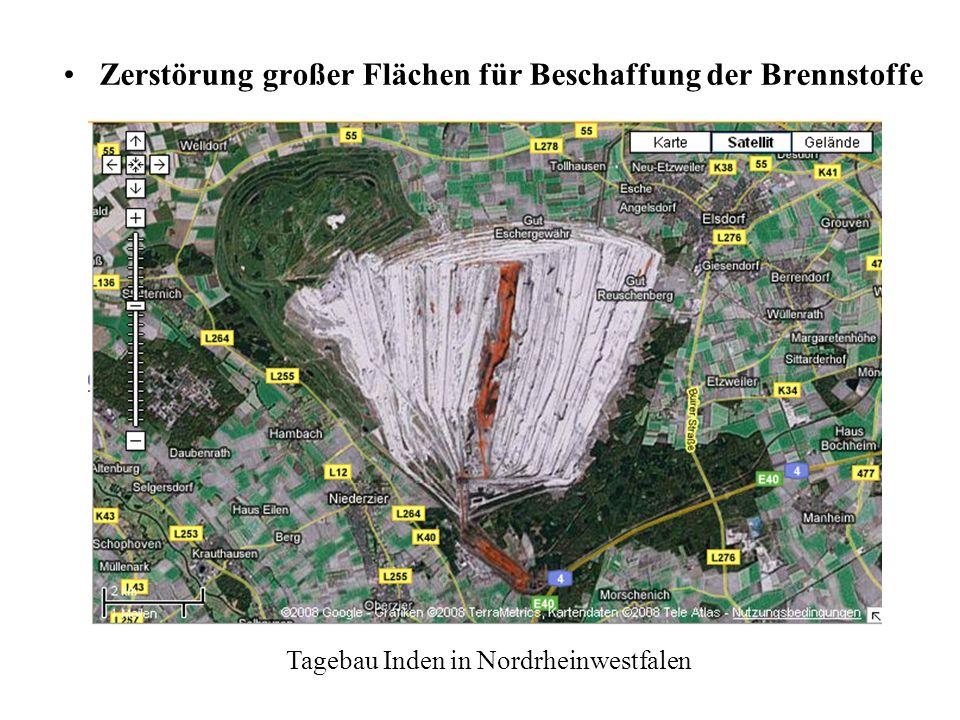 Zerstörung großer Flächen für Beschaffung der Brennstoffe