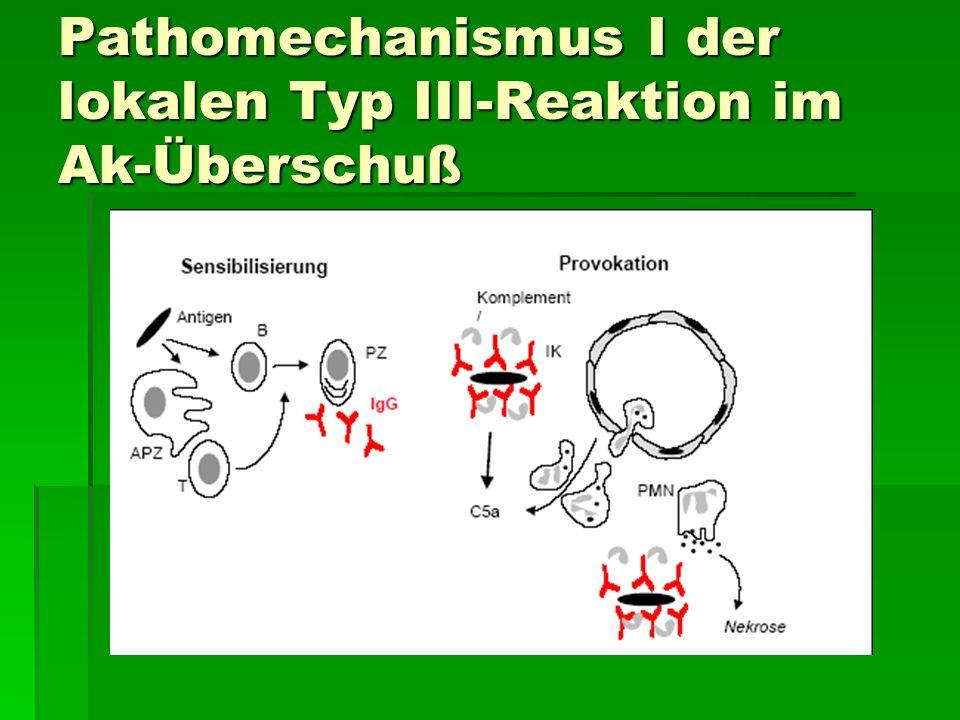 Pathomechanismus I der lokalen Typ III-Reaktion im Ak-Überschuß