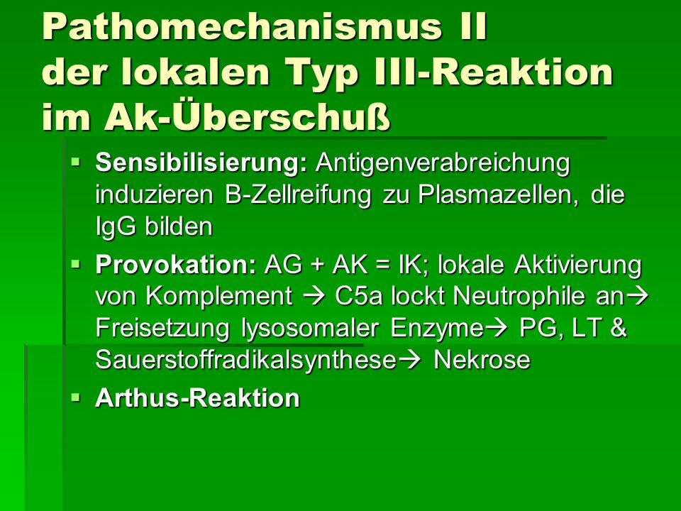 Pathomechanismus II der lokalen Typ III-Reaktion im Ak-Überschuß