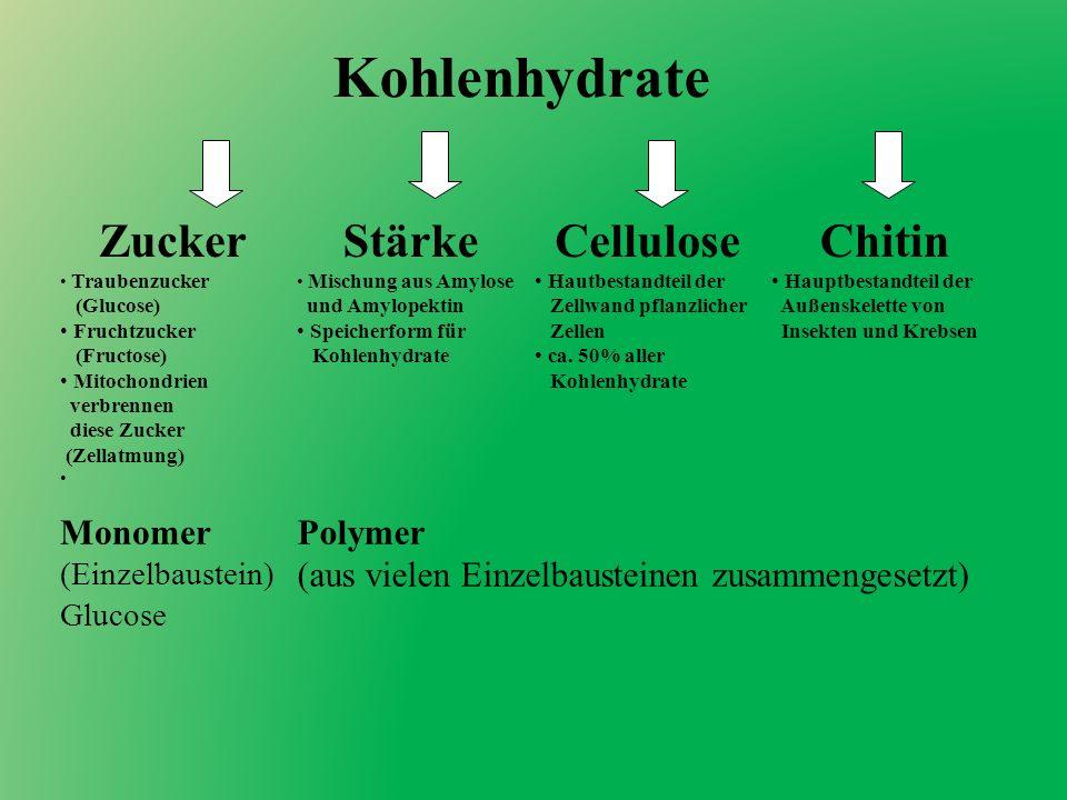 Kohlenhydrate Zucker Stärke Cellulose Chitin Monomer Polymer