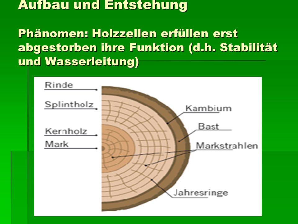 Aufbau und Entstehung Phänomen: Holzzellen erfüllen erst abgestorben ihre Funktion (d.h.