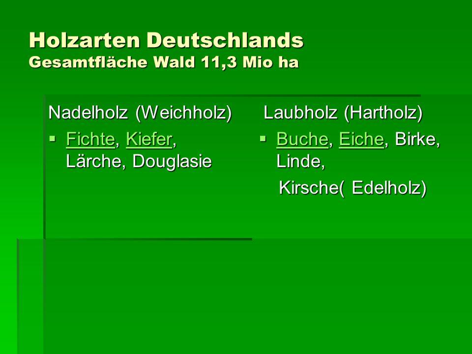 Holzarten Deutschlands Gesamtfläche Wald 11,3 Mio ha