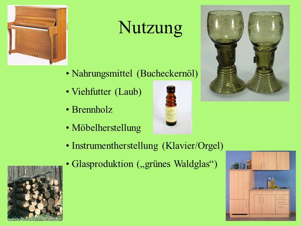 Nutzung Nahrungsmittel (Bucheckernöl) Viehfutter (Laub) Brennholz
