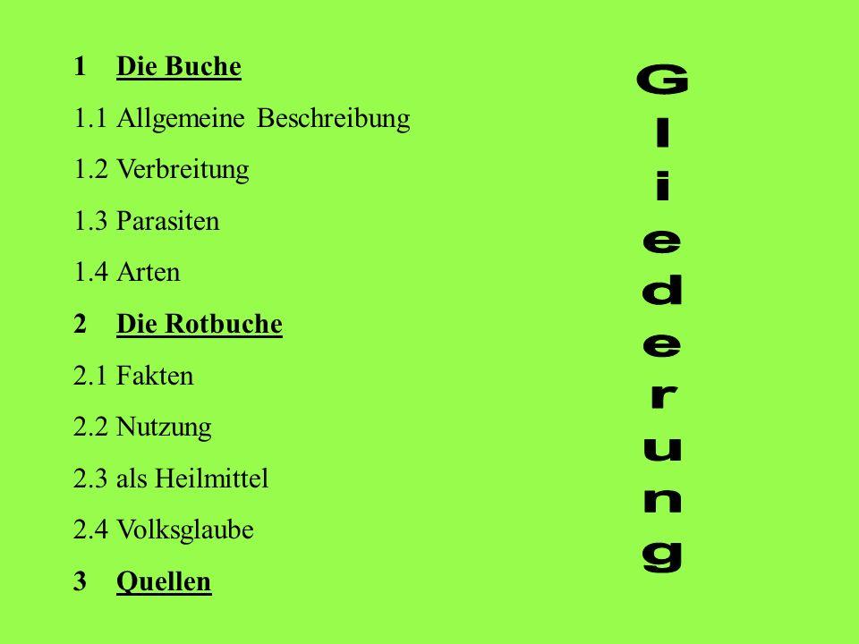 Gliederung Die Buche 1.1 Allgemeine Beschreibung 1.2 Verbreitung