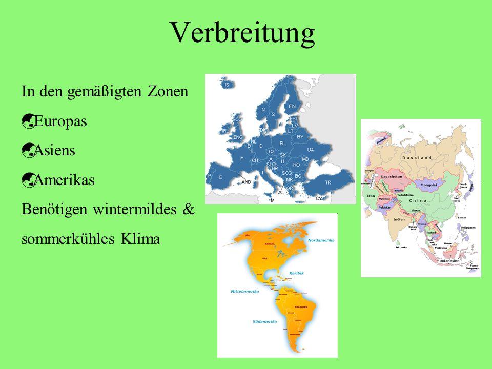 Verbreitung In den gemäßigten Zonen Europas Asiens Amerikas