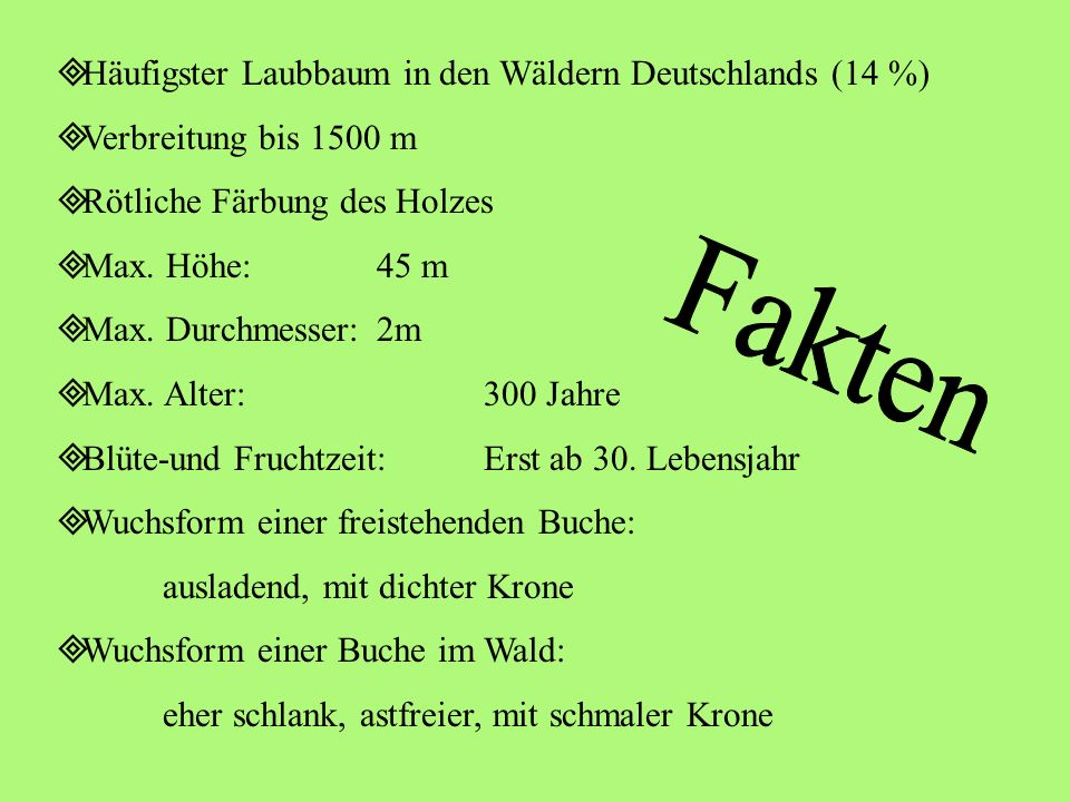 Fakten Häufigster Laubbaum in den Wäldern Deutschlands (14 %)