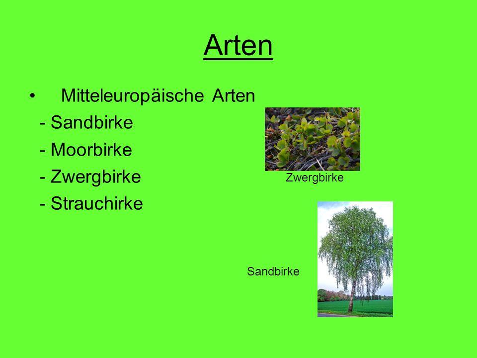 Arten Mitteleuropäische Arten - Sandbirke - Moorbirke - Zwergbirke