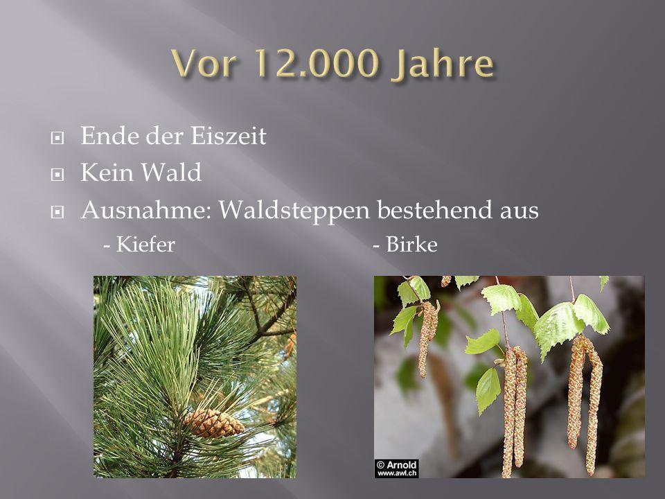 Vor 12.000 Jahre Ende der Eiszeit Kein Wald