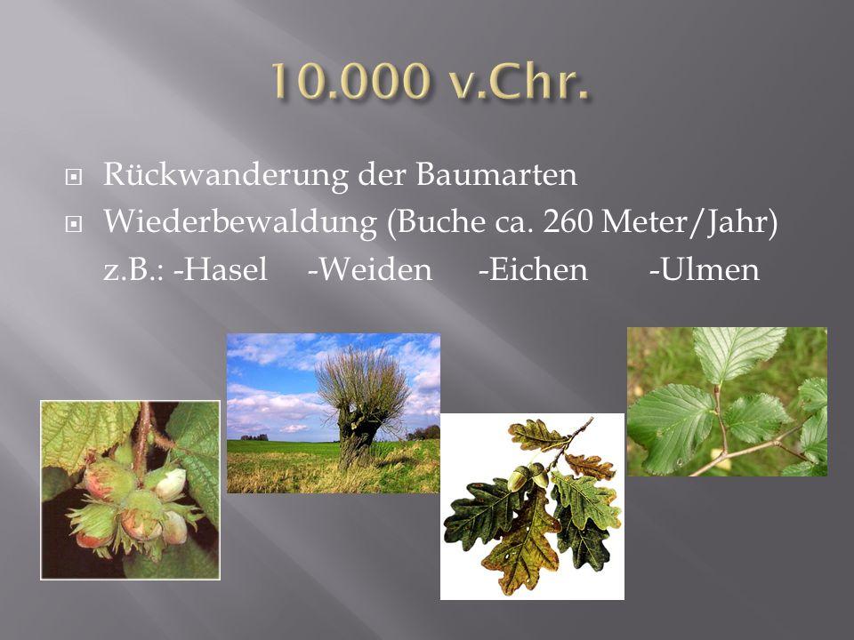 10.000 v.Chr. Rückwanderung der Baumarten