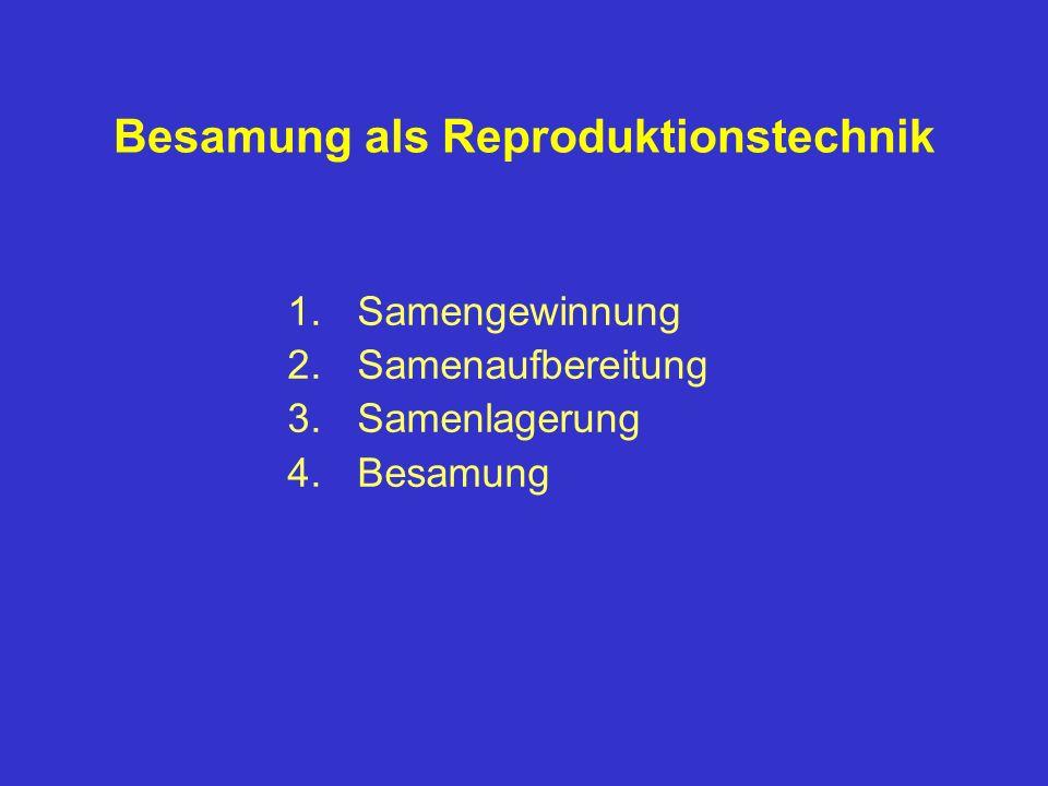 Besamung als Reproduktionstechnik