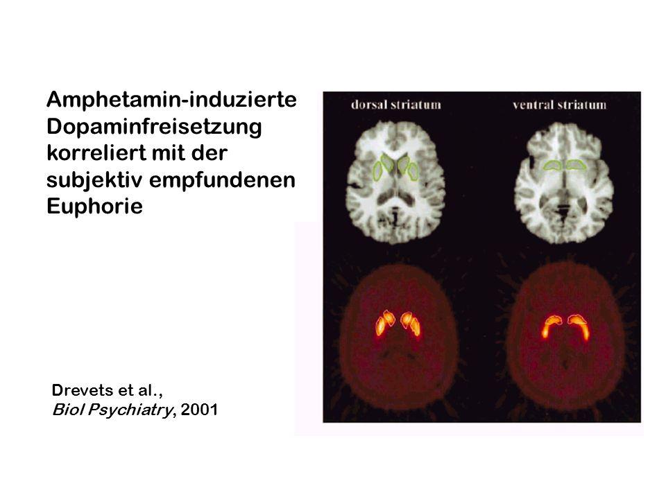 Amphetamin-induzierte Dopaminfreisetzung korreliert mit der
