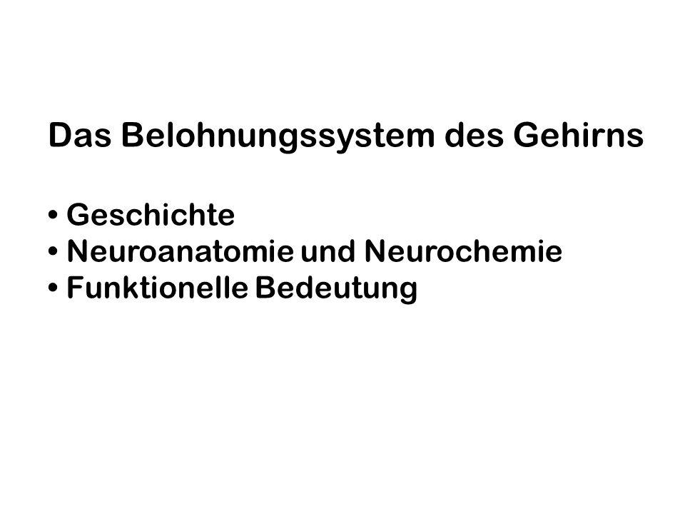 Das Belohnungssystem des Gehirns