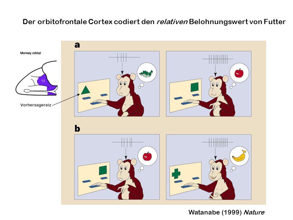 Der orbitofrontale Cortex codiert den relativen Belohnungswert von Futter
