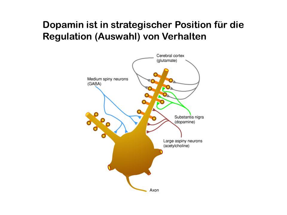 Dopamin ist in strategischer Position für die