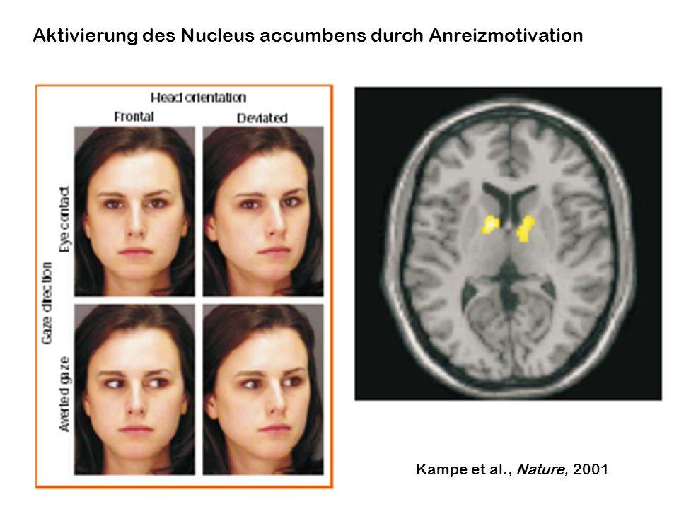 Aktivierung des Nucleus accumbens durch Anreizmotivation