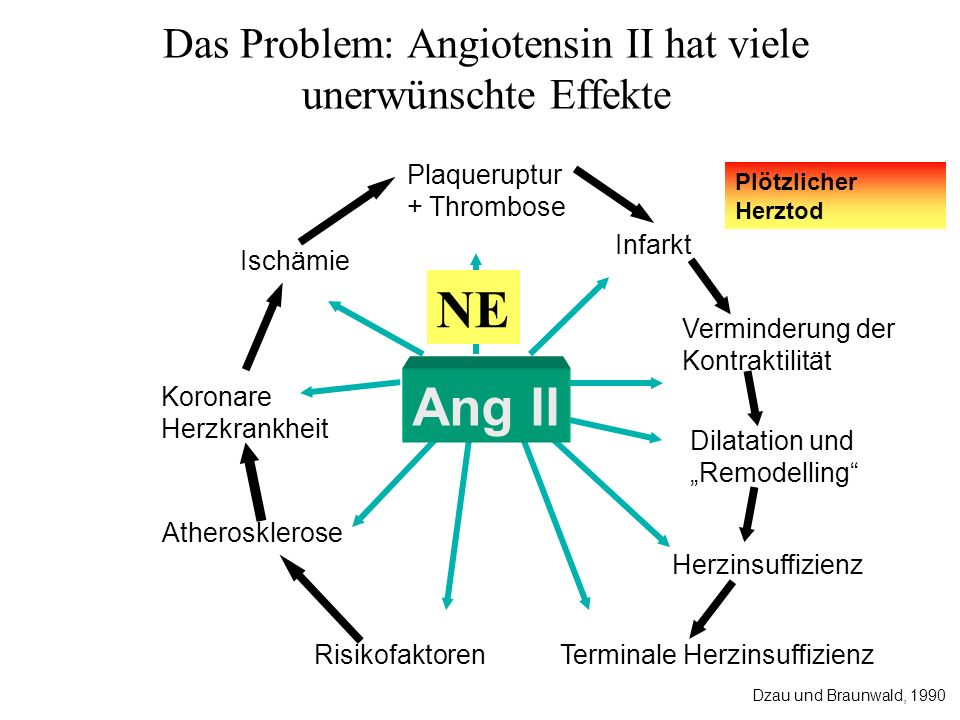 Das Problem: Angiotensin II hat viele unerwünschte Effekte
