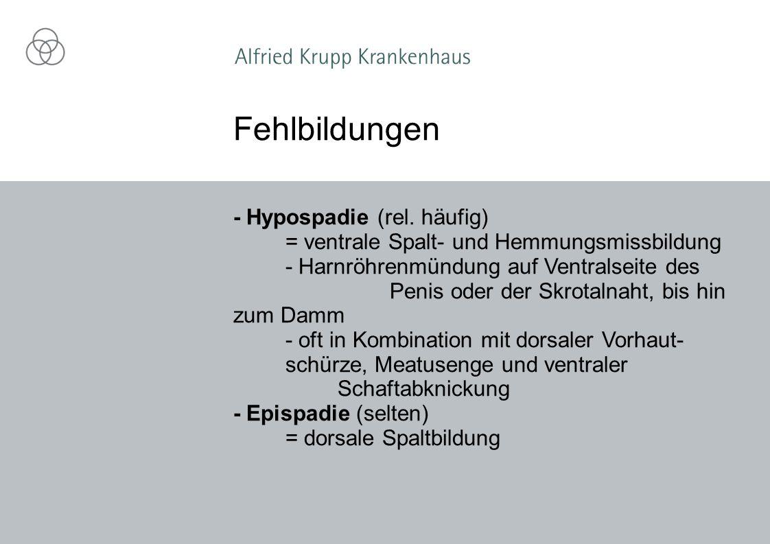 Fehlbildungen - Hypospadie (rel. häufig)