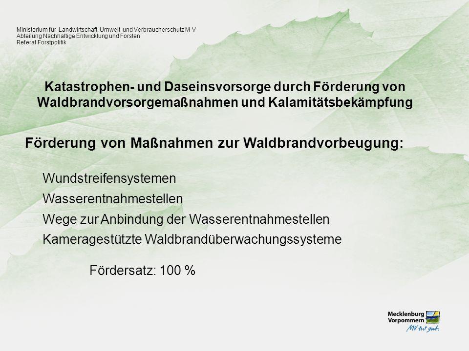 Förderung von Maßnahmen zur Waldbrandvorbeugung: