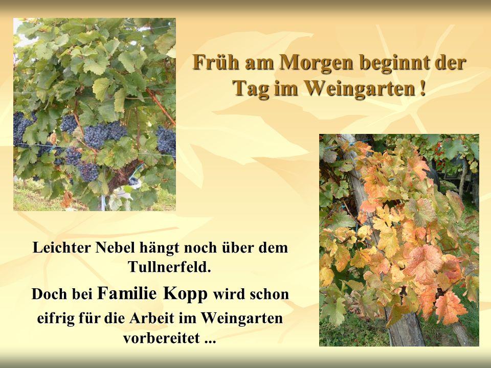 Früh am Morgen beginnt der Tag im Weingarten !