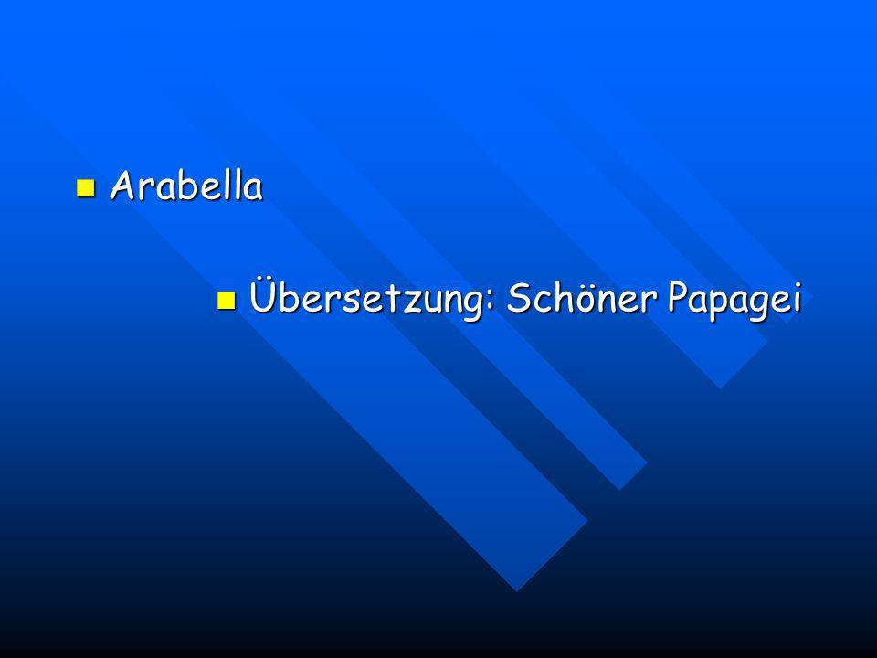 Arabella Übersetzung: Schöner Papagei