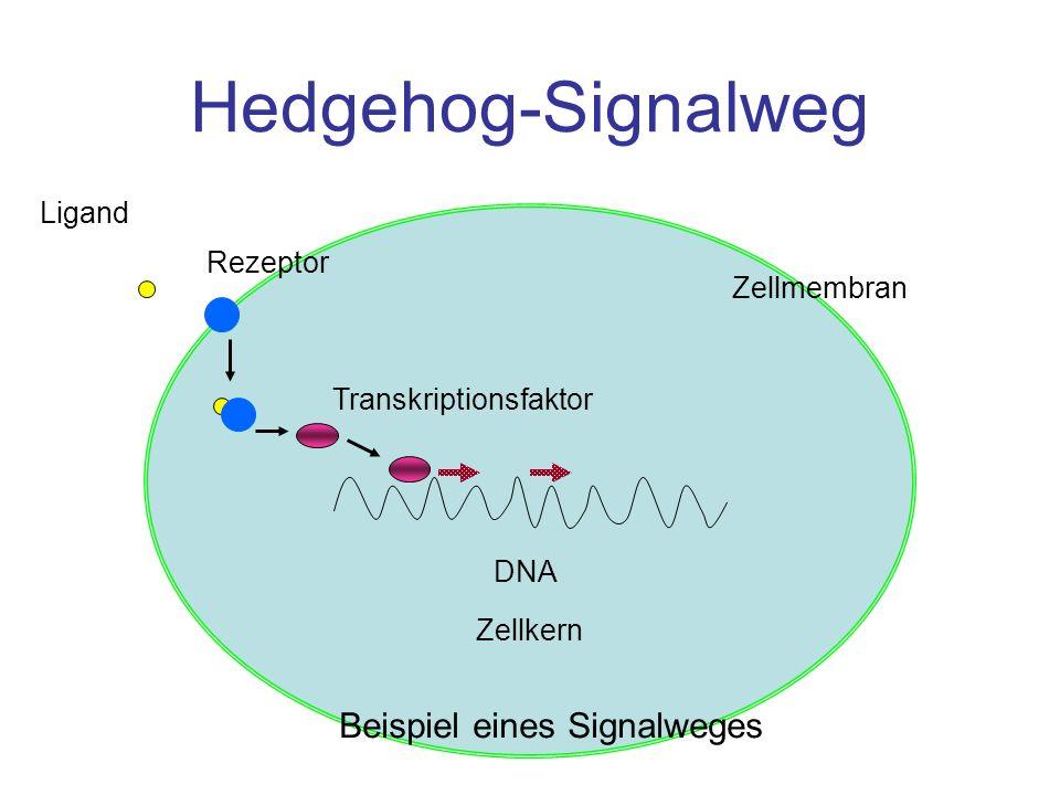 Beispiel eines Signalweges