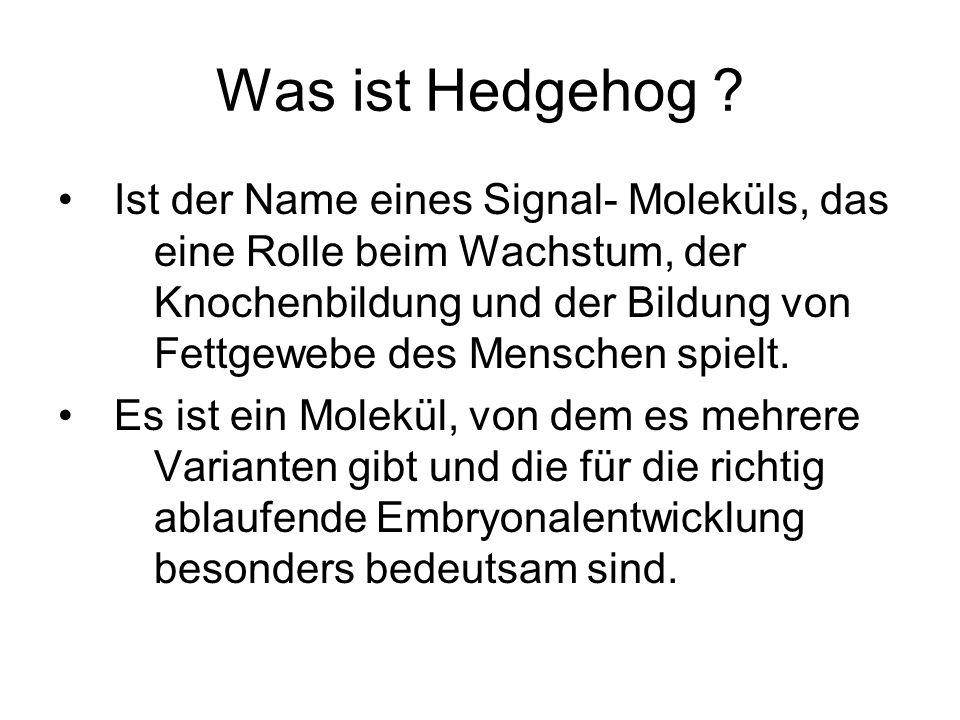 Was ist Hedgehog