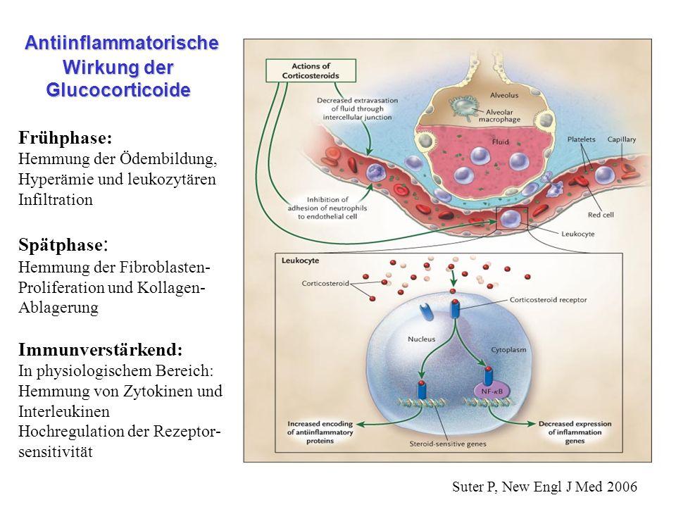 Antiinflammatorische Wirkung der Glucocorticoide