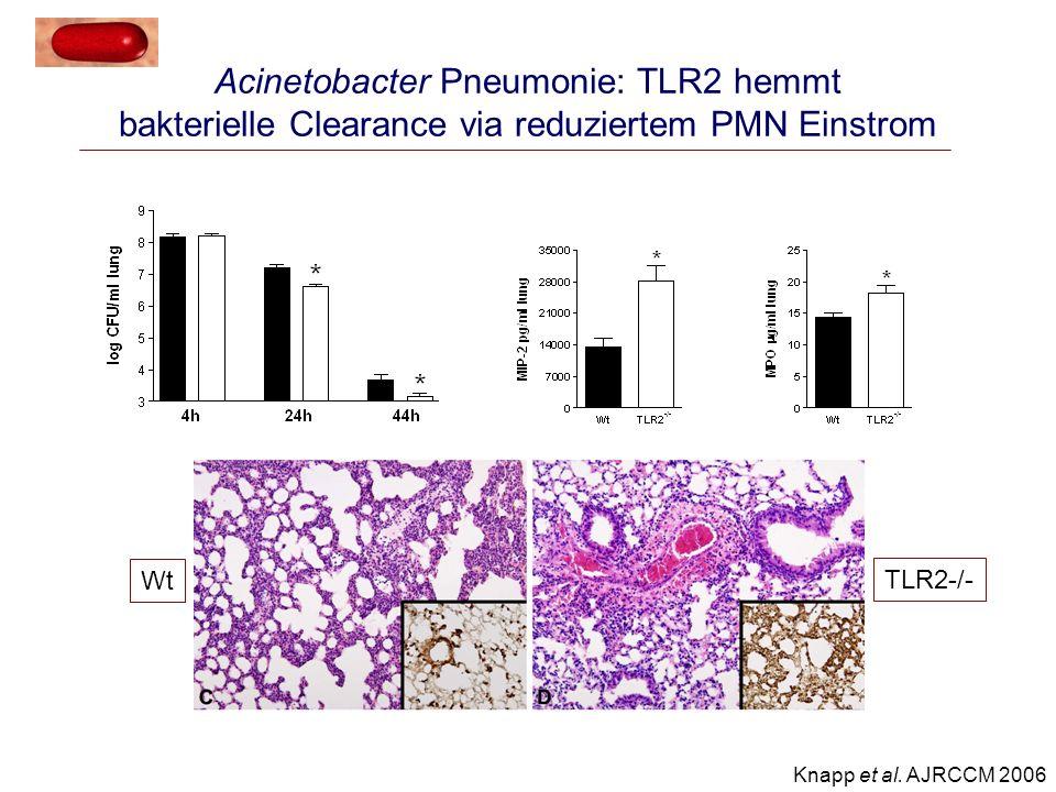 Acinetobacter Pneumonie: TLR2 hemmt bakterielle Clearance via reduziertem PMN Einstrom