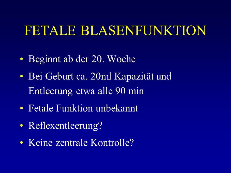 FETALE BLASENFUNKTION