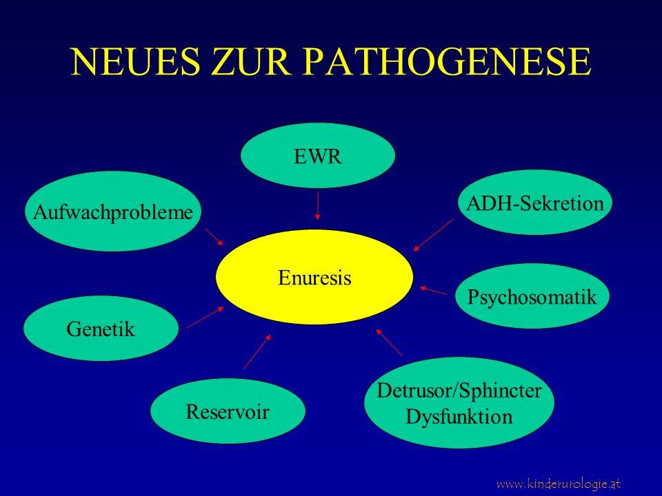 NEUES ZUR PATHOGENESE EWR ADH-Sekretion Aufwachprobleme Enuresis