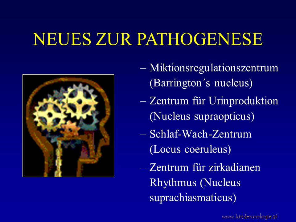 NEUES ZUR PATHOGENESE Miktionsregulationszentrum (Barrington´s nucleus) Zentrum für Urinproduktion (Nucleus supraopticus)
