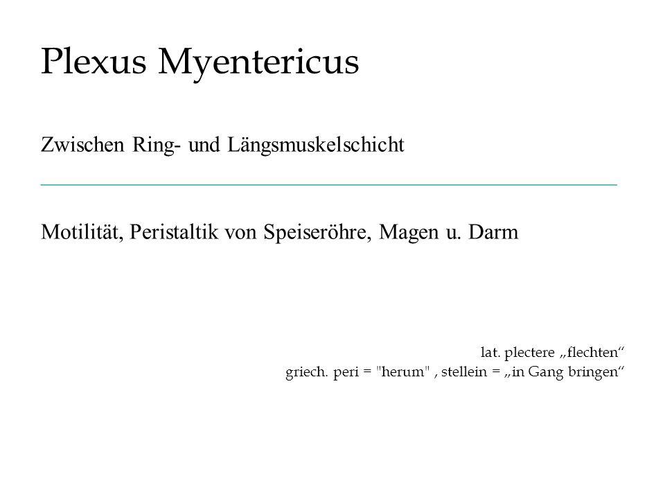 Plexus Myentericus Zwischen Ring- und Längsmuskelschicht