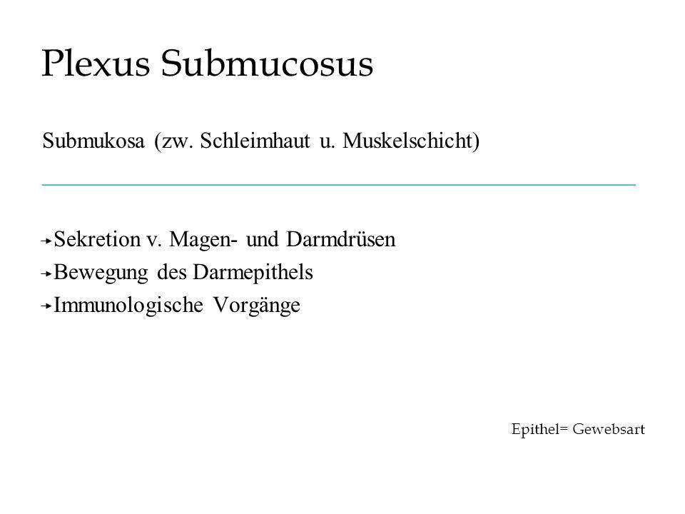 Plexus Submucosus Submukosa (zw. Schleimhaut u. Muskelschicht)