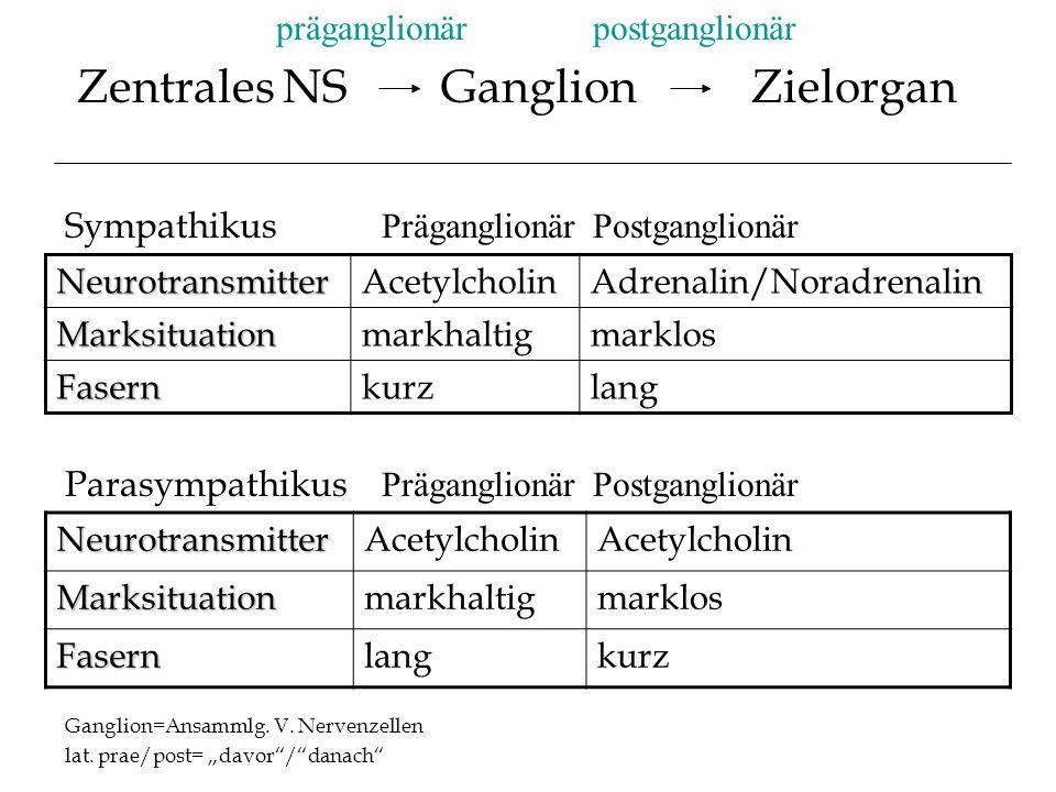 Zentrales NS Ganglion Zielorgan