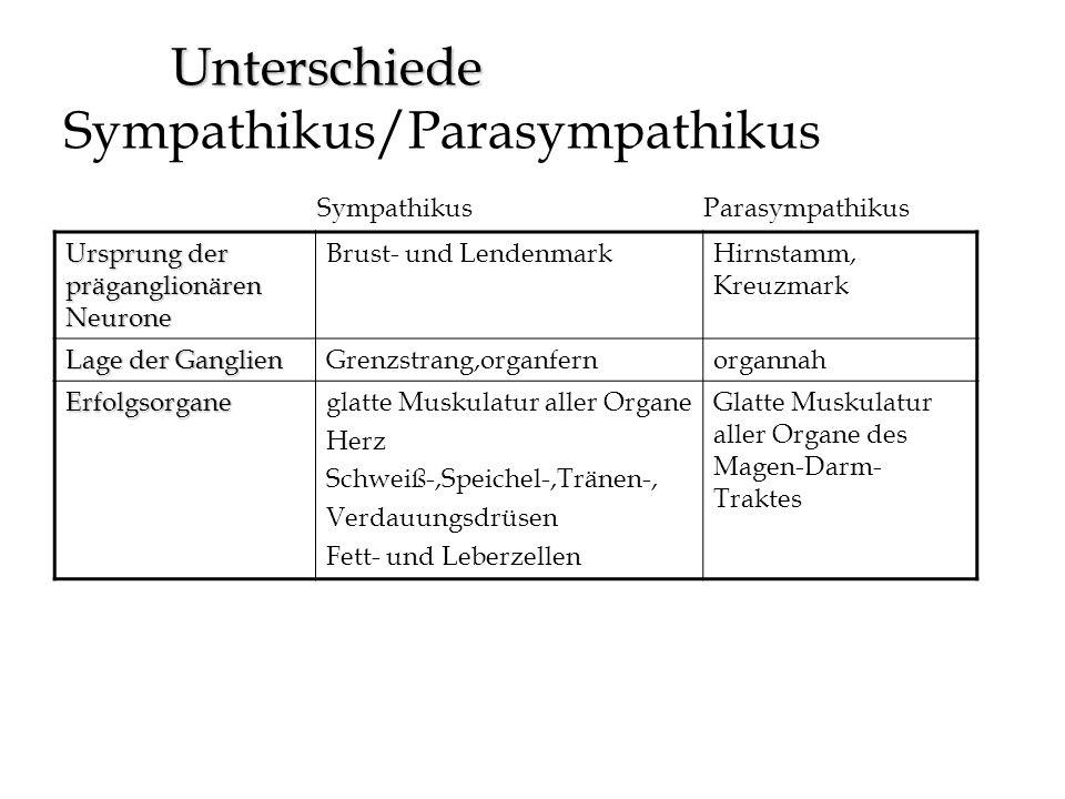 Unterschiede Sympathikus/Parasympathikus