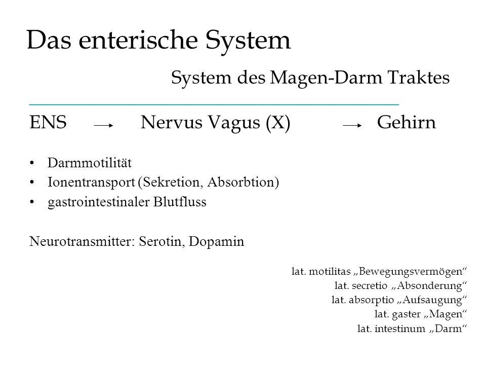 Das enterische System System des Magen-Darm Traktes