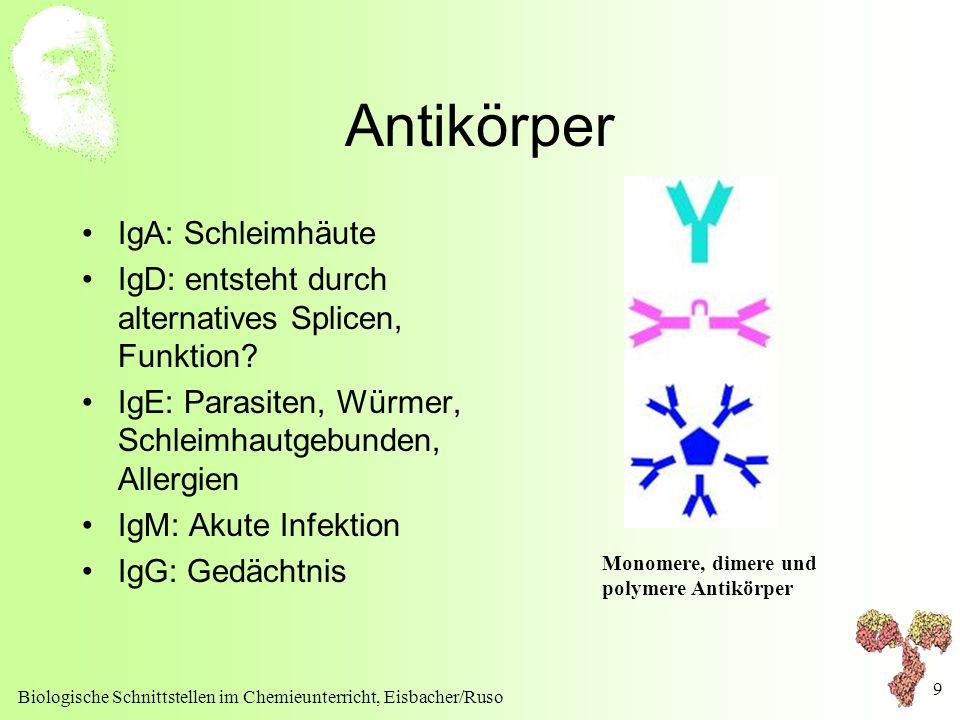 Antikörper IgA: Schleimhäute