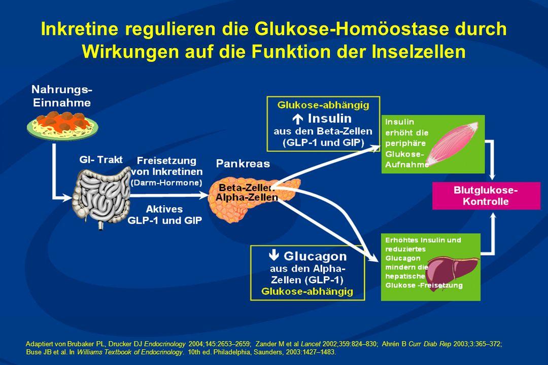 Inkretine regulieren die Glukose-Homöostase durch Wirkungen auf die Funktion der Inselzellen