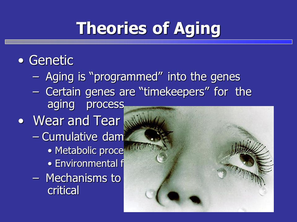 Theories of Aging Genetic Wear and Tear
