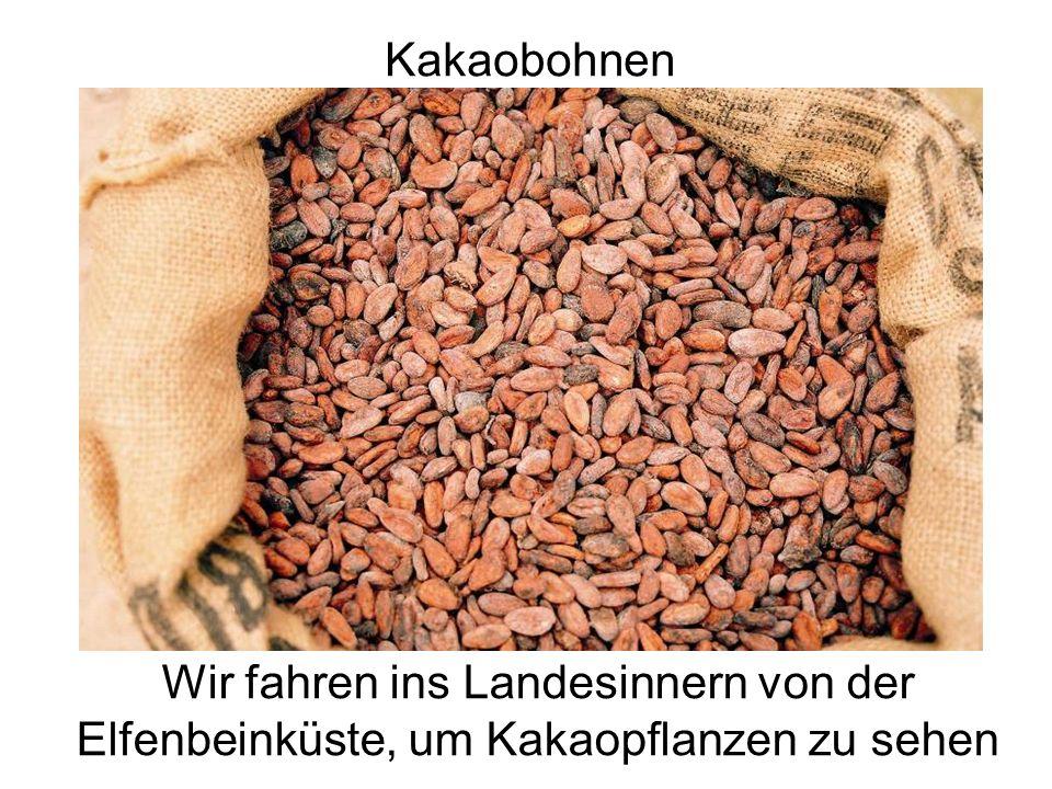 Kakaobohnen Getrocknete Bohnen in einem Sack. .infozentrum-schoko.de. Wir fahren ins Landesinnern von der Elfenbeinküste, um Kakaopflanzen zu sehen.