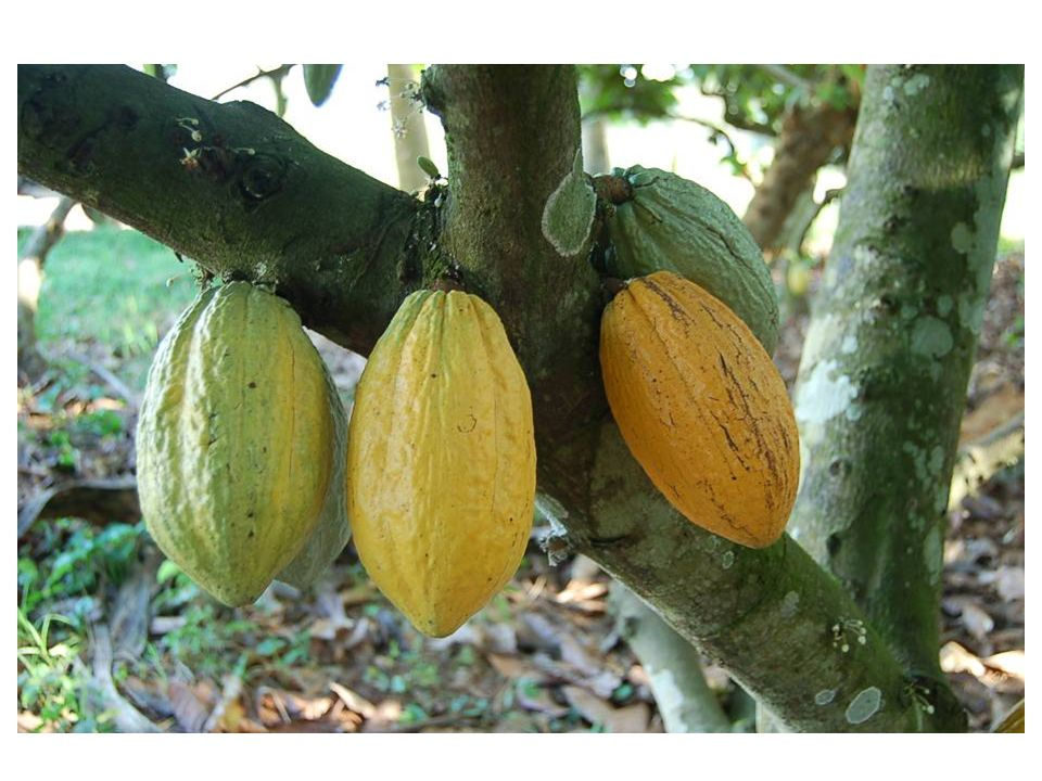 Gelbe und grüne Früchte